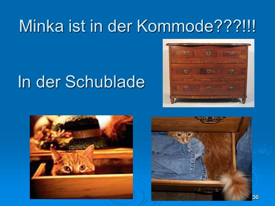 Minka ist in der Kommode???!!! 36 In der Schublade