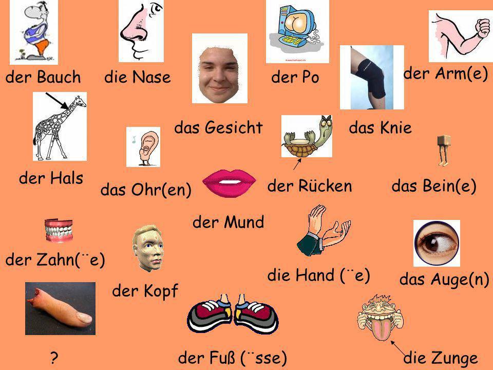 der Bauchdie Nase der Hals das Ohr(en) das Gesicht der Rücken das Knie der Arm(e) das Bein(e) das Auge(n) die Zunge der Mund der Fuß (¨sse) die Hand (