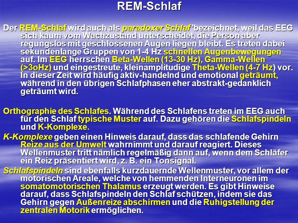 REM-Schlaf Der REM-Schlaf wird auch als paradoxer Schlaf 'bezeichnet, weil das EEG sich kaum vom Wachzustand unterscheidet, die Person aber regungslos