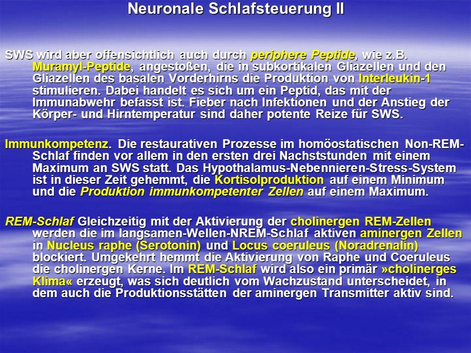Neuronale Schlafsteuerung II SWS wird aber offensichtlich auch durch periphere Peptide, wie z.B. Muramyl-Peptide, angestoßen, die in subkortikalen Gli