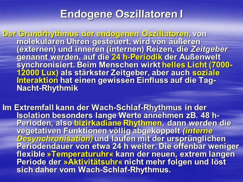 Endogene Oszillatoren I Der Grundrhythmus der endogenen Oszillatoren, von molekularen Uhren gesteuert, wird von äußeren (externen) und inneren (intern