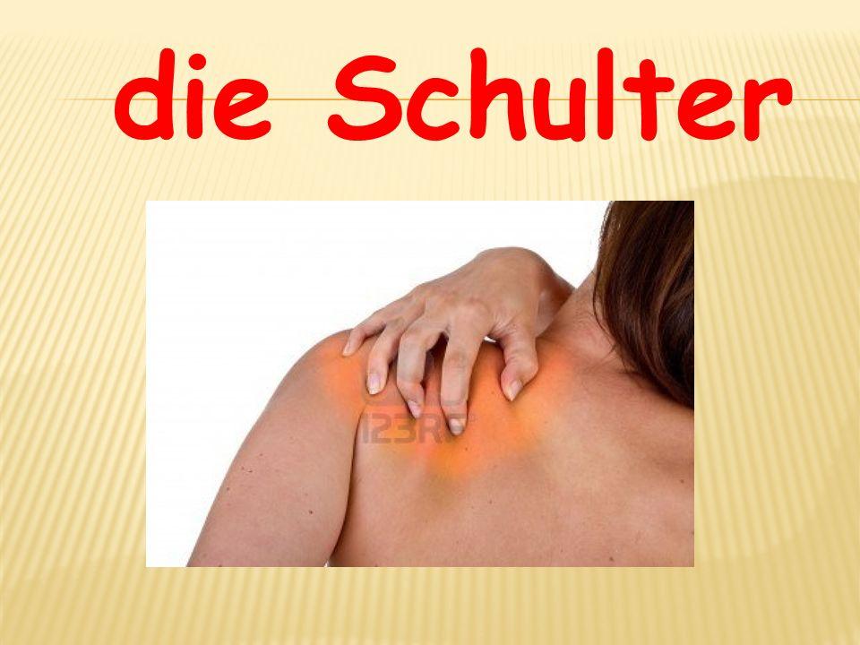 die Schulter