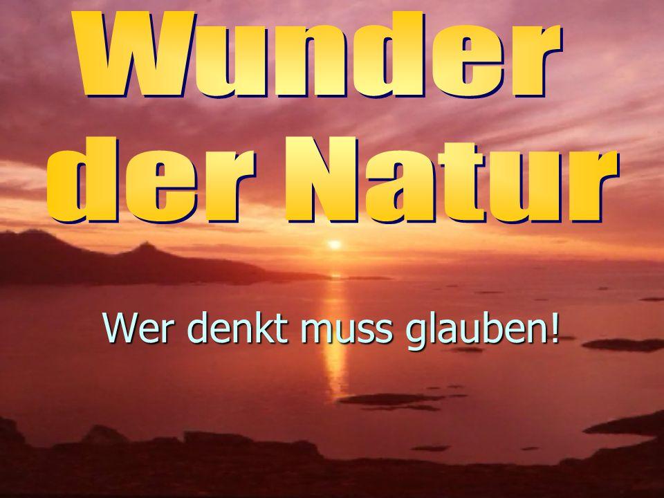 Thema n Die Natur ist voller Wunder...