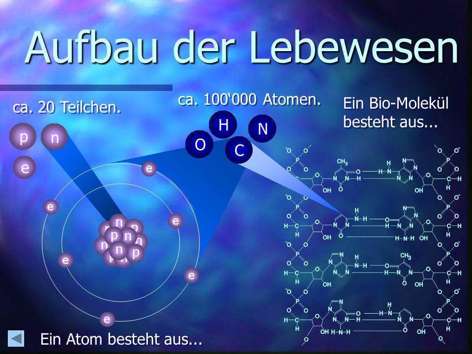 Ein Bio-Molekül besteht aus...Ein Bio-Molekül besteht aus...