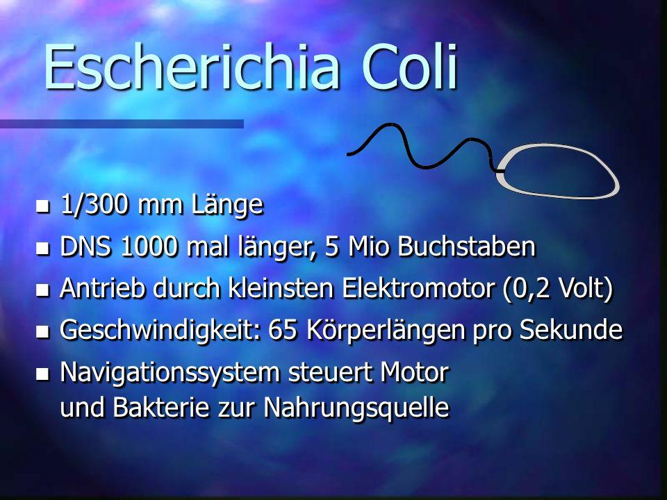 Escherichia Coli n 1/300 mm Länge n DNS 1000 mal länger, 5 Mio Buchstaben n Antrieb durch kleinsten Elektromotor (0,2 Volt) n Geschwindigkeit: 65 Körperlängen pro Sekunde n Navigationssystem steuert Motor und Bakterie zur Nahrungsquelle n 1/300 mm Länge n DNS 1000 mal länger, 5 Mio Buchstaben n Antrieb durch kleinsten Elektromotor (0,2 Volt) n Geschwindigkeit: 65 Körperlängen pro Sekunde n Navigationssystem steuert Motor und Bakterie zur Nahrungsquelle