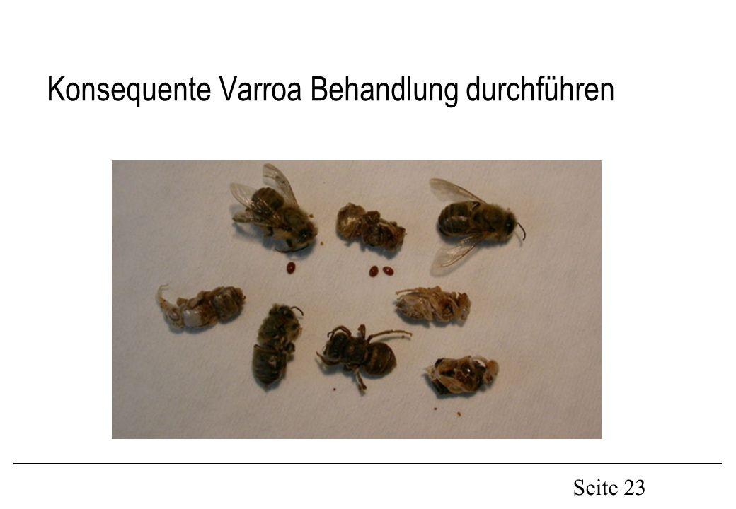 Seite 23 Konsequente Varroa Behandlung durchführen