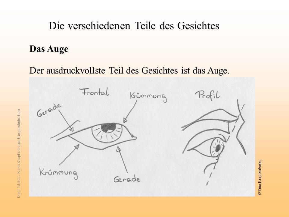 Die verschiedenen Teile des Gesichtes Das Auge Der ausdruckvollste Teil des Gesichtes ist das Auge.