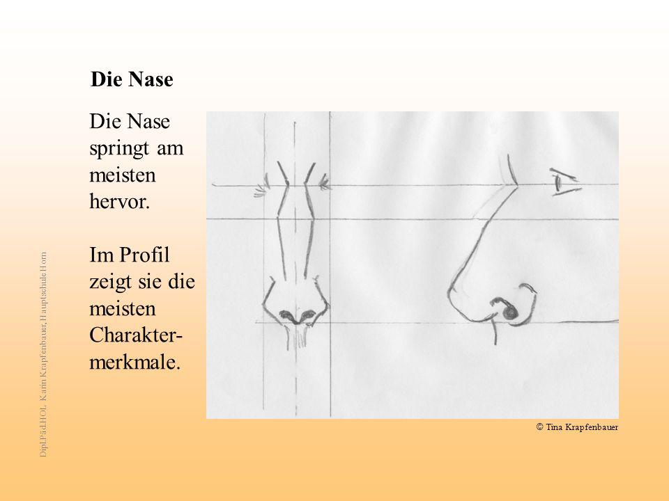 Die Nase Die Nase springt am meisten hervor. Im Profil zeigt sie die meisten Charakter- merkmale. Dipl.Päd.HOL Karin Krapfenbauer, Hauptschule Horn ©