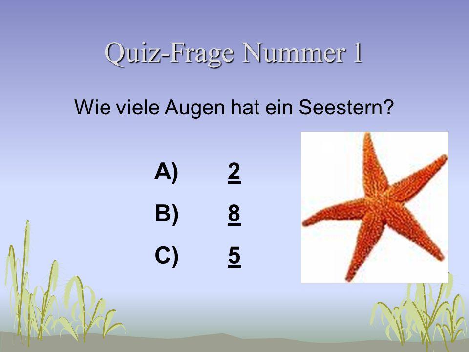 Ostsee-Quiz