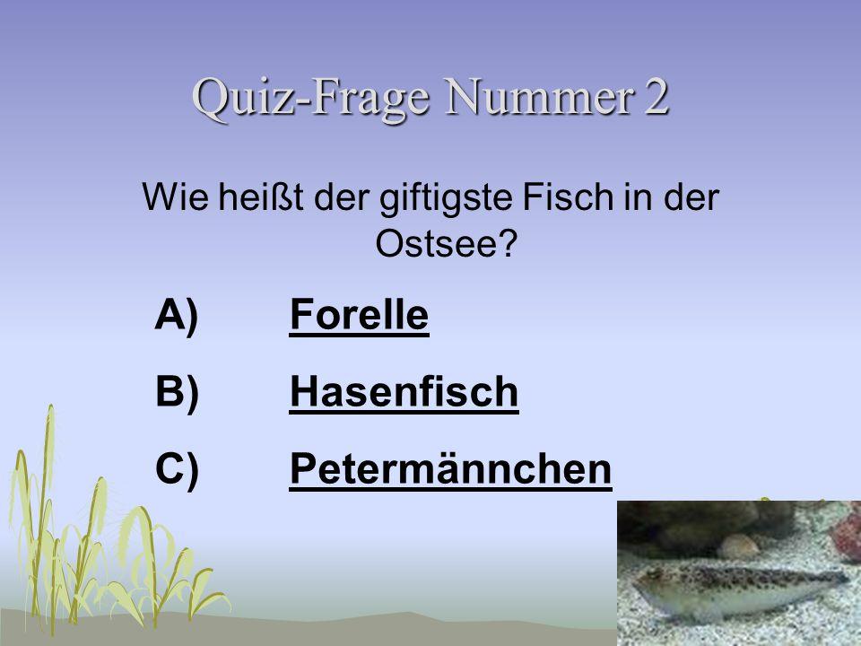 Quiz-Frage Nummer 1 Wie viele Augen hat ein Seestern? A)22 B)88 C)55