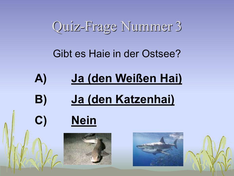Quiz-Frage Nummer 2 Wie heißt der giftigste Fisch in der Ostsee? A)ForelleForelle B)HasenfischHasenfisch C)PetermännchenPetermännchen
