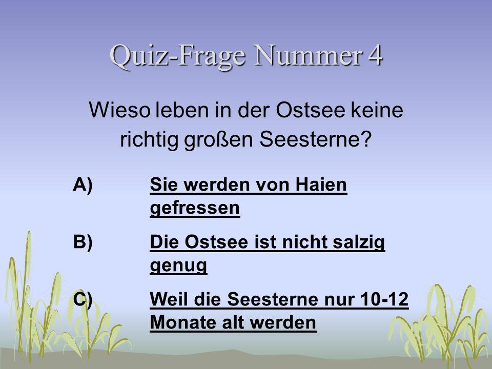 Quiz-Frage Nummer 3 Gibt es Haie in der Ostsee? A)Ja (den Weißen Hai)Ja (den Weißen Hai) B)Ja (den Katzenhai)Ja (den Katzenhai) C)NeinNein