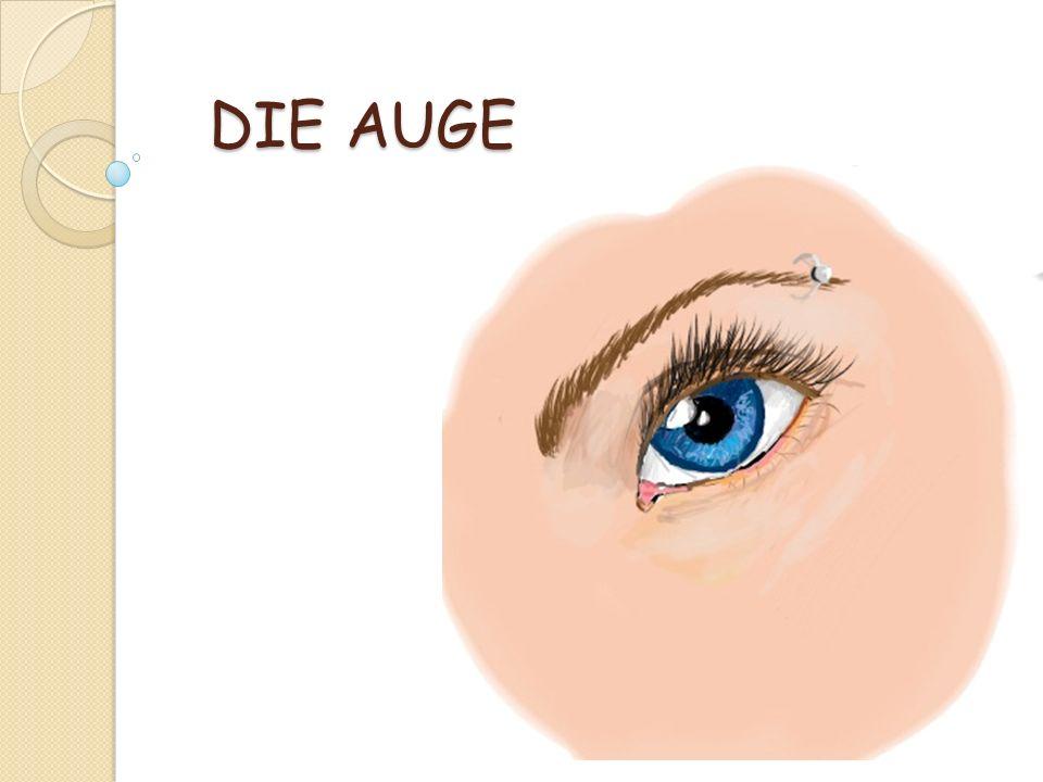 Unser Auge funktioniert wie eine Filmkamera: Wie bei einem Kameraobjektiv fällt Licht durch einzelnen Bauteile des Auges - Hornhaut, vordere Augenkammer, Pupille, Linse und Glaskörper.
