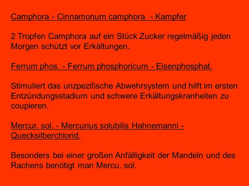 Camphora - Cinnamonum camphora - Kampfer 2 Tropfen Camphora auf ein Stück Zucker regelmäßig jeden Morgen schützt vor Erkältungen. Ferrum phos. - Ferru