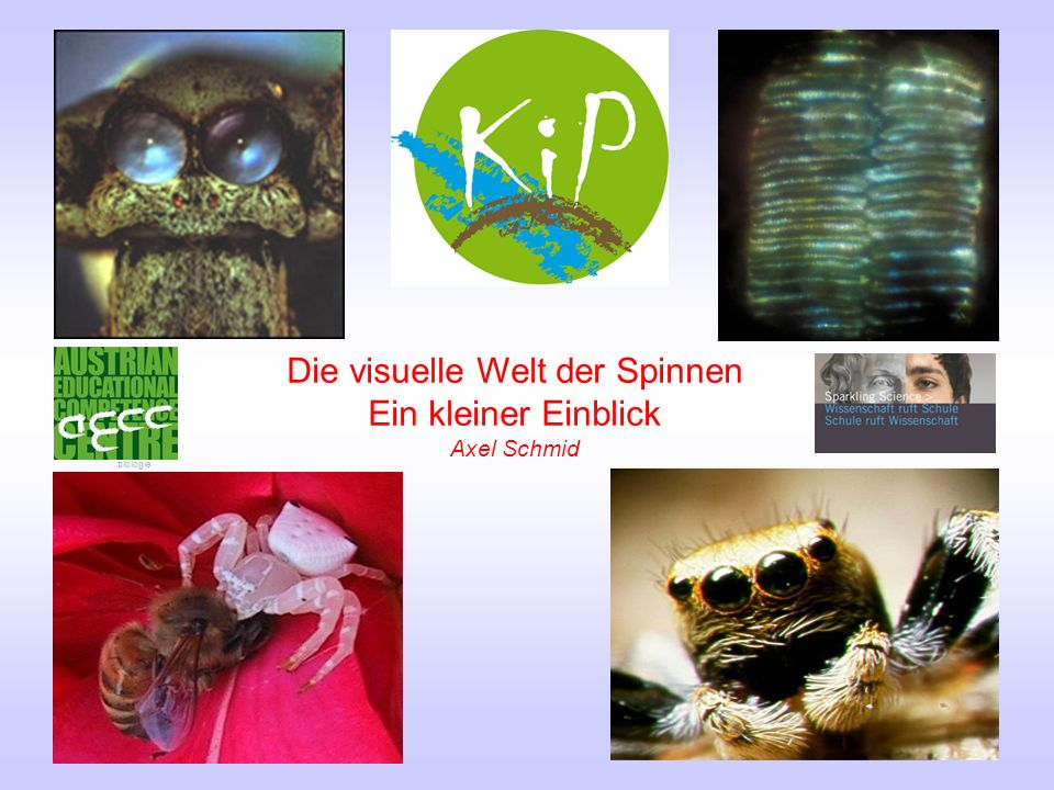 Die visuelle Welt der Spinnen Ein kleiner Einblick Axel Schmid biologie