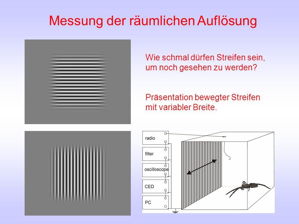 Messung der zeitlichen Auflösung Reagiert Cupiennius salei auf zeitliche Helligkeitsänderungen.