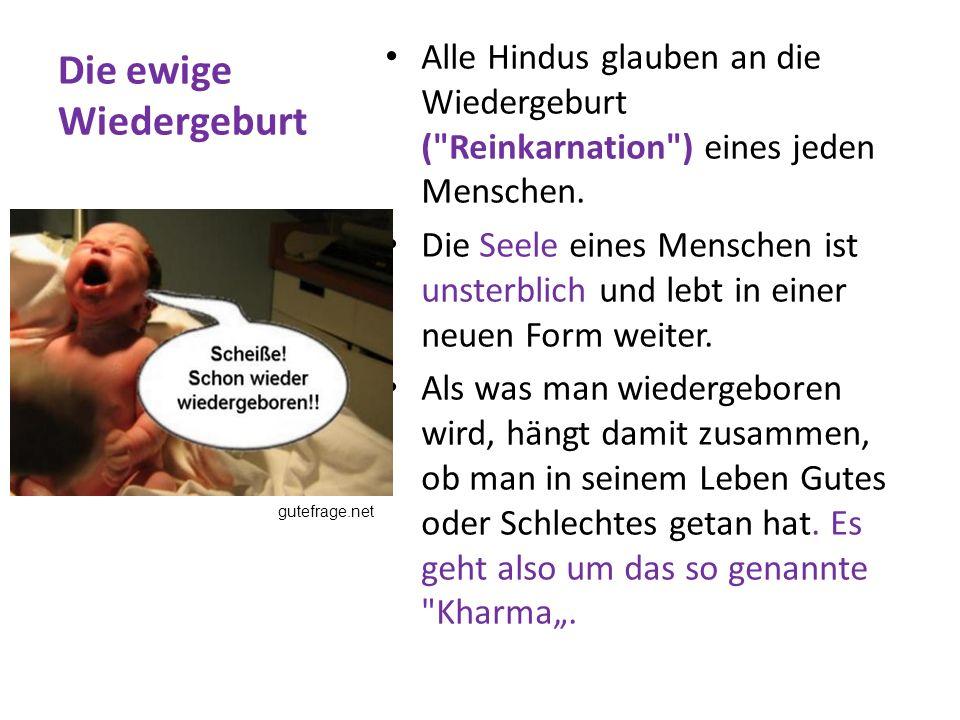Die heilige Kuh Hinduisten glauben, dass man als Mensch, Tier oder sogar als Stein wiedergeboren werden kann.