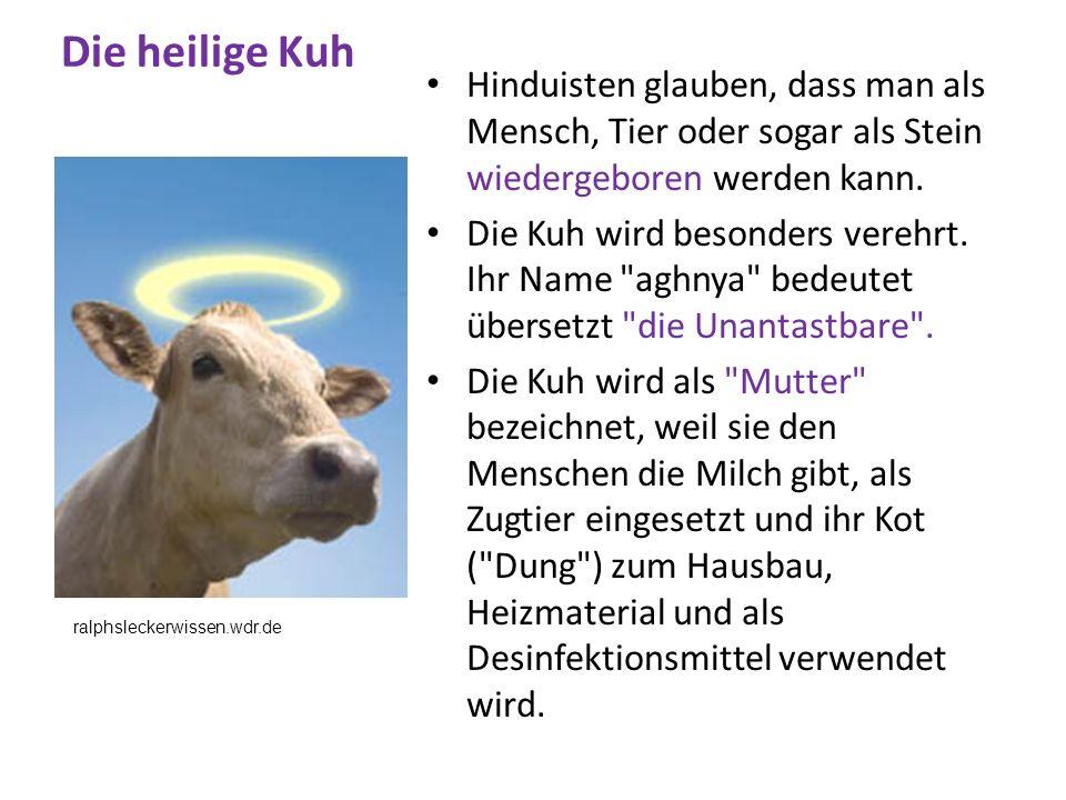 Die heilige Kuh Hinduisten glauben, dass man als Mensch, Tier oder sogar als Stein wiedergeboren werden kann. Die Kuh wird besonders verehrt. Ihr Name