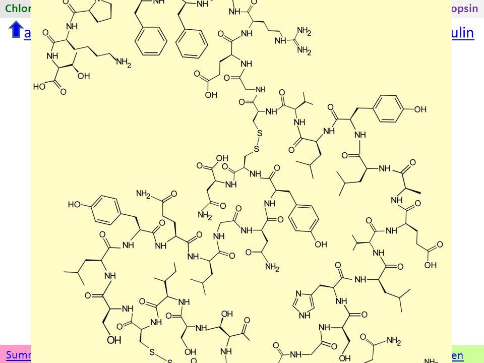 Insulin Namen Umwandeln in eine andere Darstellung 3D-ModellSkelettformel GruppenformelSummenformelLewisformel In der Skelettformel anderen Stoff wählenÜbersicht zu Insulin tert-ButylmethyletherChlorgasAdrenalinInsulinRhodopsinFolsäureMethanSoda