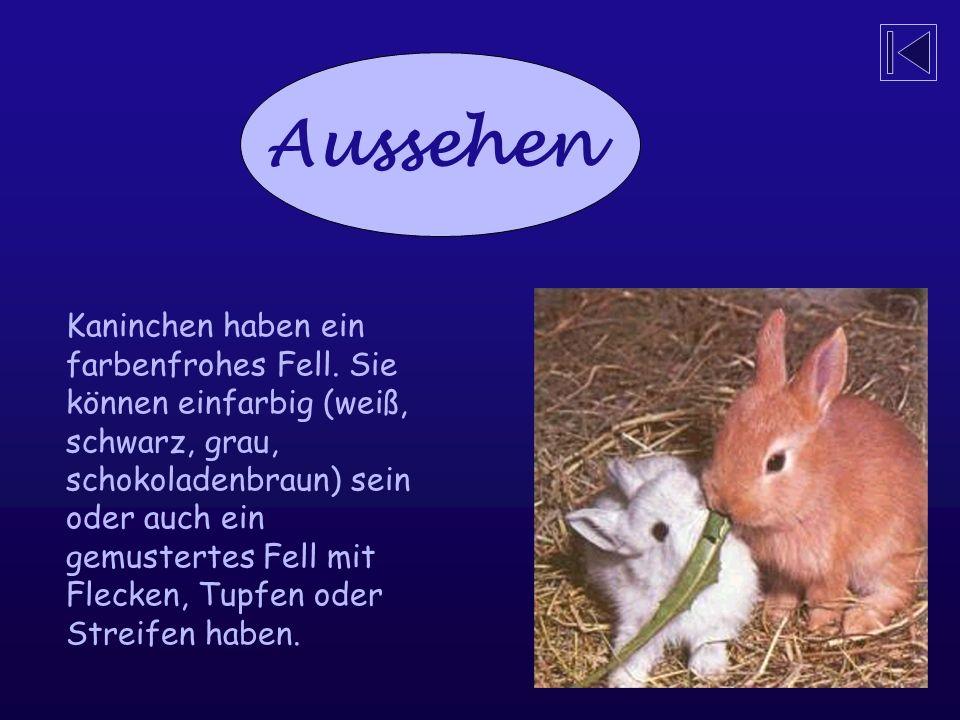 Aussehen Kaninchen haben ein farbenfrohes Fell.