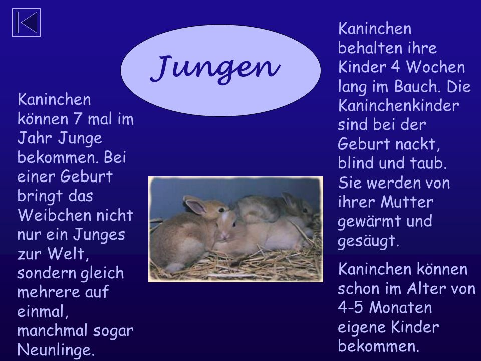Kaninchen können 7 mal im Jahr Junge bekommen.