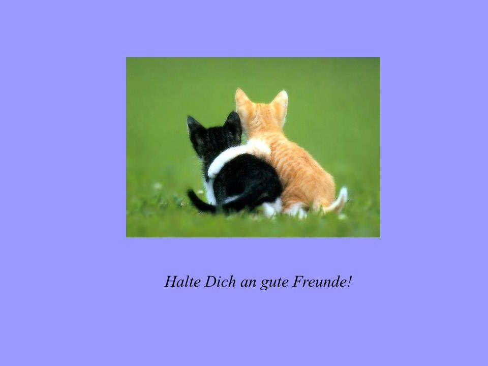 Halte Dich an gute Freunde!