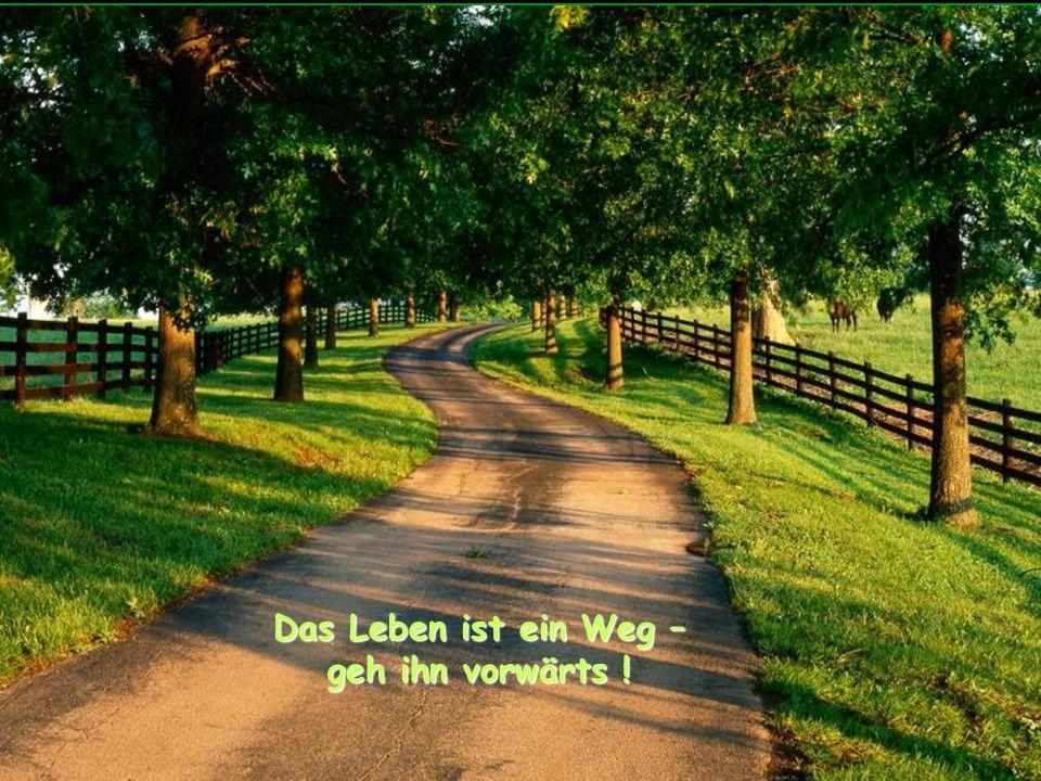 Das Leben ist ein Weg – geh ihn vorwärts !