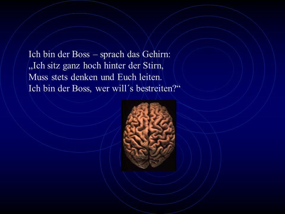 Ich bin der Boss – sprach das Gehirn: Ich sitz ganz hoch hinter der Stirn, Muss stets denken und Euch leiten. Ich bin der Boss, wer will´s bestreiten?