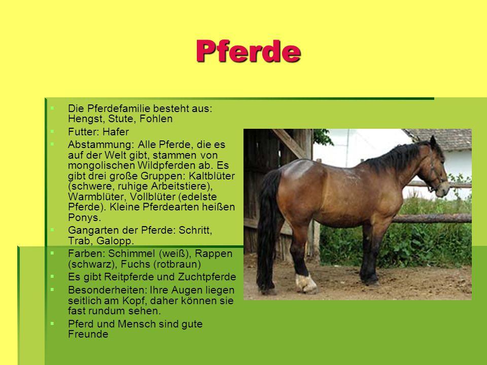 Pferde Die Pferdefamilie besteht aus: Hengst, Stute, Fohlen Futter: Hafer Abstammung: Alle Pferde, die es auf der Welt gibt, stammen von mongolischen