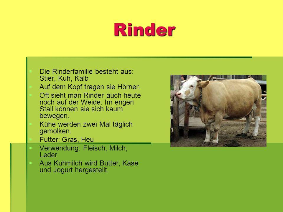 Rinder Die Rinderfamilie besteht aus: Stier, Kuh, Kalb Auf dem Kopf tragen sie Hörner. Oft sieht man Rinder auch heute noch auf der Weide. Im engen St