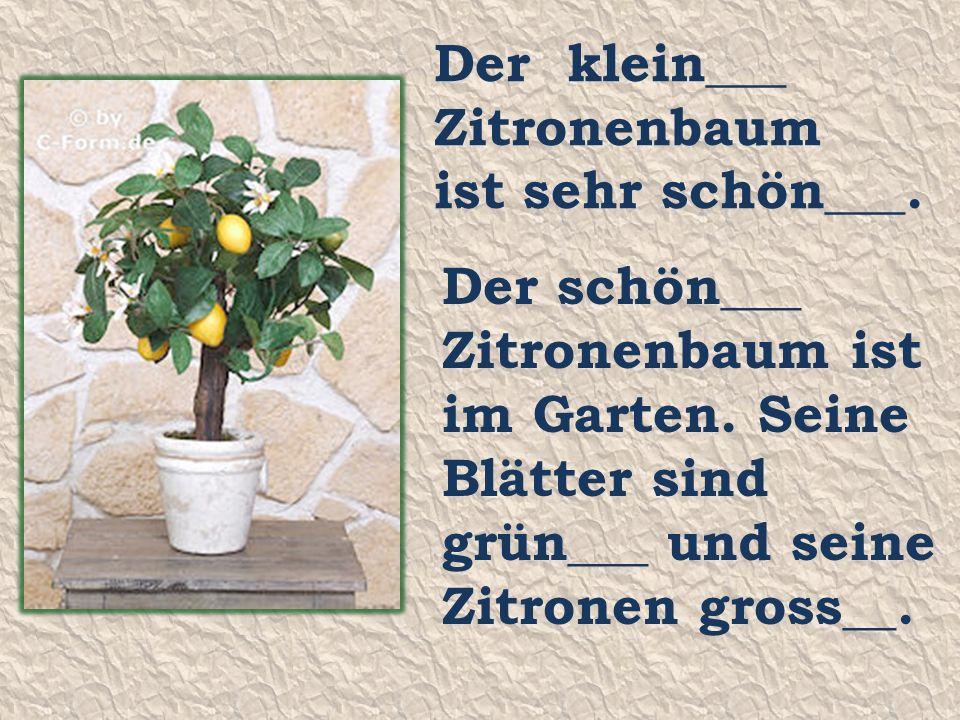 Der klein___ Zitronenbaum ist sehr schön___. Der schön___ Zitronenbaum ist im Garten.