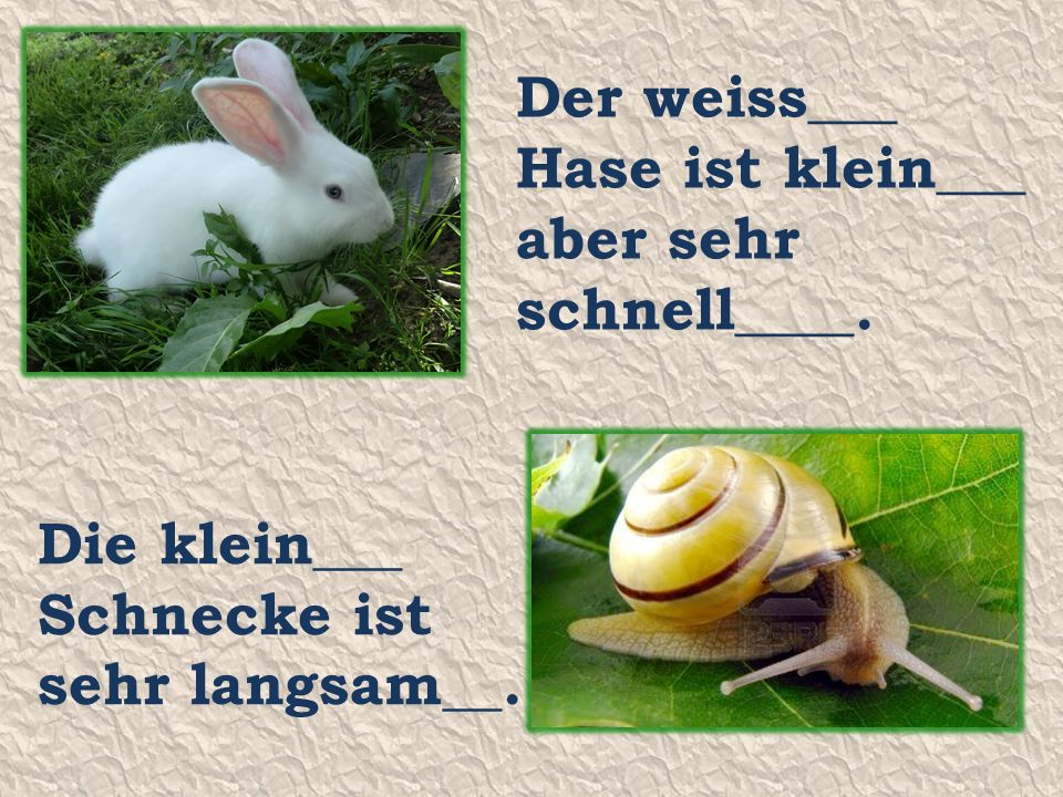 Der weiss___ Hase ist klein___ aber sehr schnell____. Die klein___ Schnecke ist sehr langsam__.