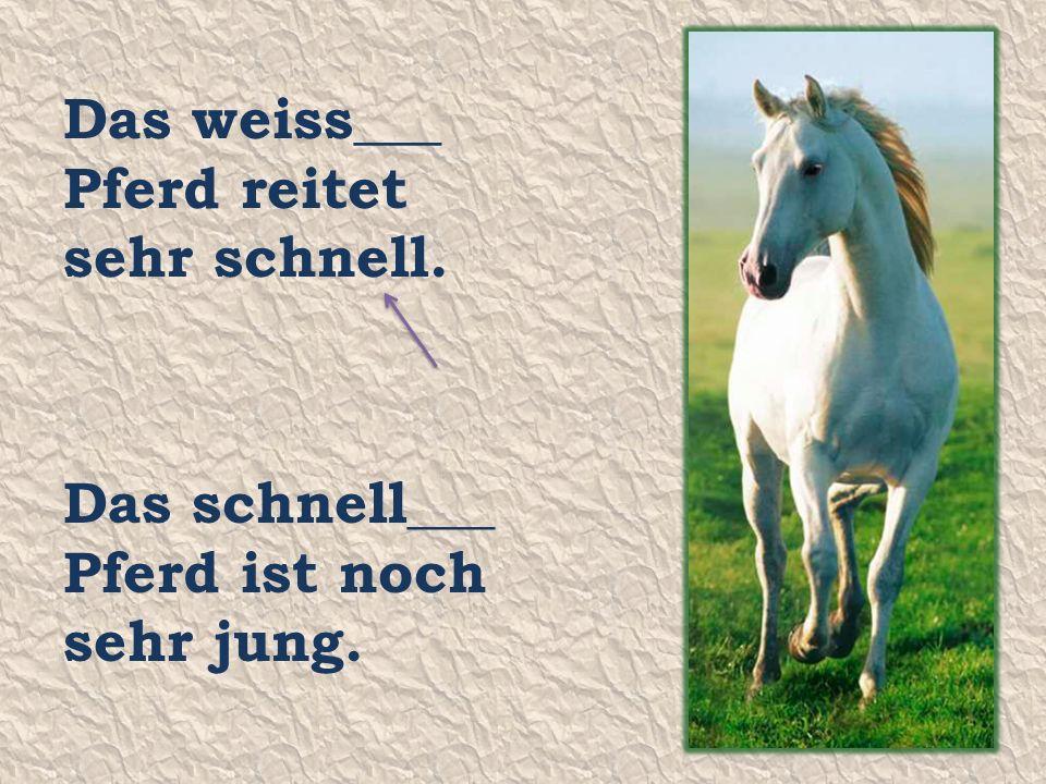 Das weiss___ Pferd reitet sehr schnell. Das schnell___ Pferd ist noch sehr jung.