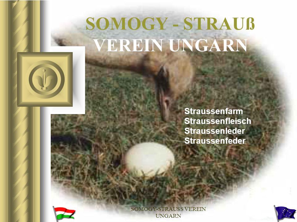 SOMOGY-STRAUSS VEREIN UNGARN SOMOGYSTRUCC EGYESÜLET SOMOGY - STRAUß VEREIN UNGARN SOMOGY OSTRICH BREEDERS ASSOCIATION