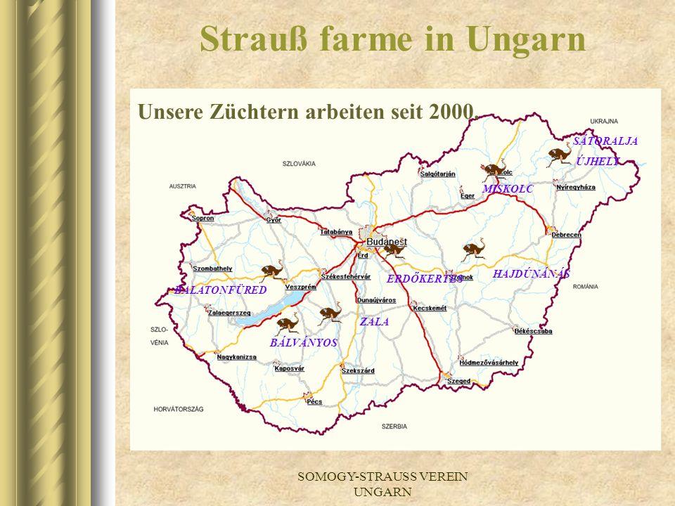 SOMOGY-STRAUSS VEREIN UNGARN Somogy-strauß Verein Ungarn
