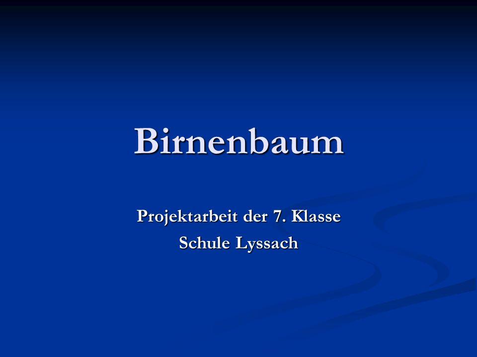 Birnenbaum Projektarbeit der 7. Klasse Schule Lyssach