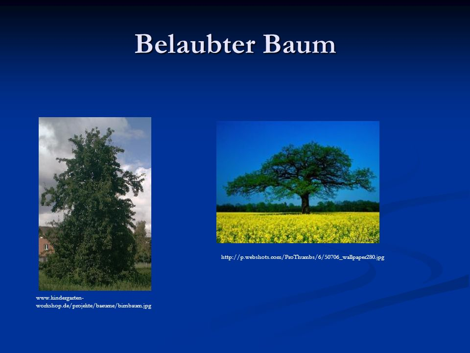 Belaubter Baum www.kindergarten- workshop.de/projekte/baeume/birnbaum.jpg http://p.webshots.com/ProThumbs/6/50706_wallpaper280.jpg