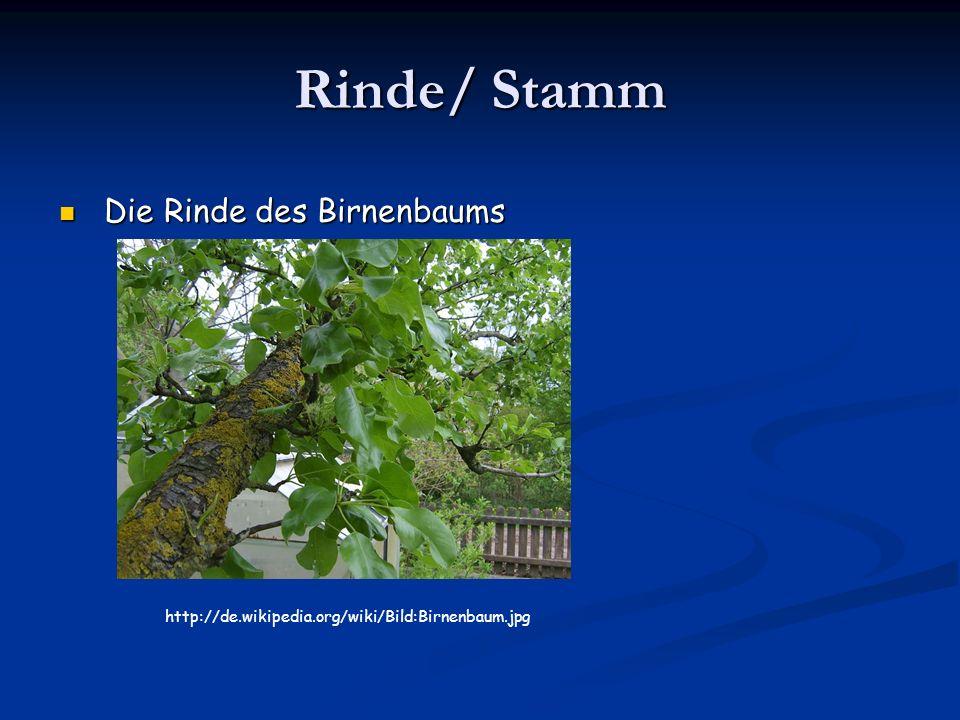 Rinde/ Stamm Die Rinde des Birnenbaums Die Rinde des Birnenbaums http://de.wikipedia.org/wiki/Bild:Birnenbaum.jpg