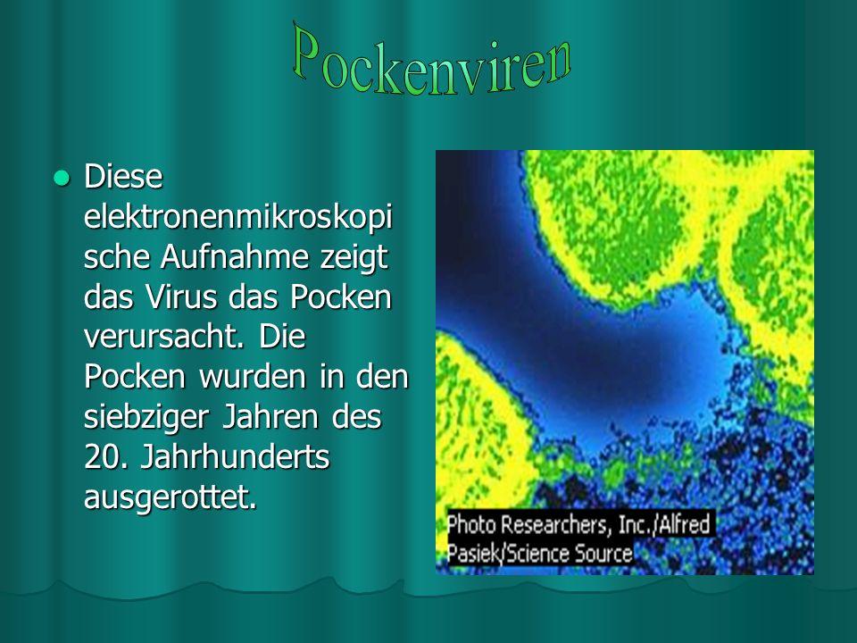 Tollwutviren werden in der Regel durch den Biss eines tollwütigen Säugetieres übertragen. Die Krankheit verläuft tödlich. Eine Schutzimpfung unmittelb