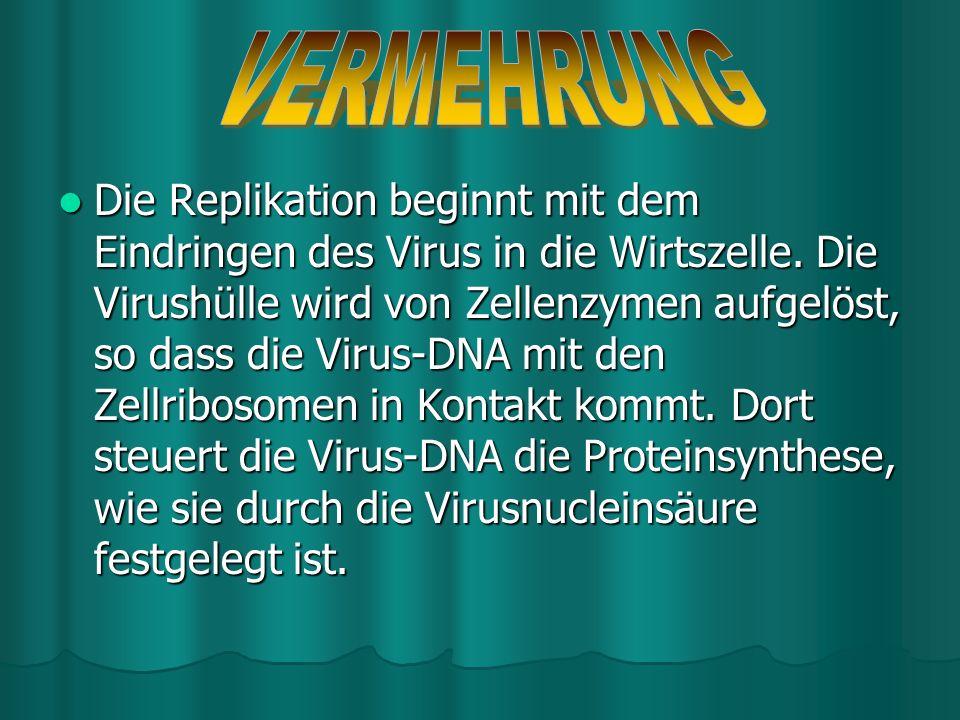 Viren verfügen nicht über die nötigen Enzyme und Stoffwechselprodukte für eine eigenständige Vermehrung. Sie müssen sich dazu der Wirtszellen bedienen