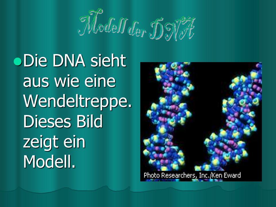 Achte Woche der Embryonalentwicklung Achte Woche der Embryonalentwicklung In der achten Woche sind alle Strukturen des menschlichen Körpers rudimentär entwickelt, und der Embryo wird zum Fetus.