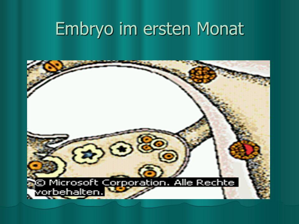 Sechster Tag der Embryonalentwicklung Sechster Tag der Embryonalentwicklung Am sechsten Tag der Embryonalentwicklung besteht der werdende Embryo aus e