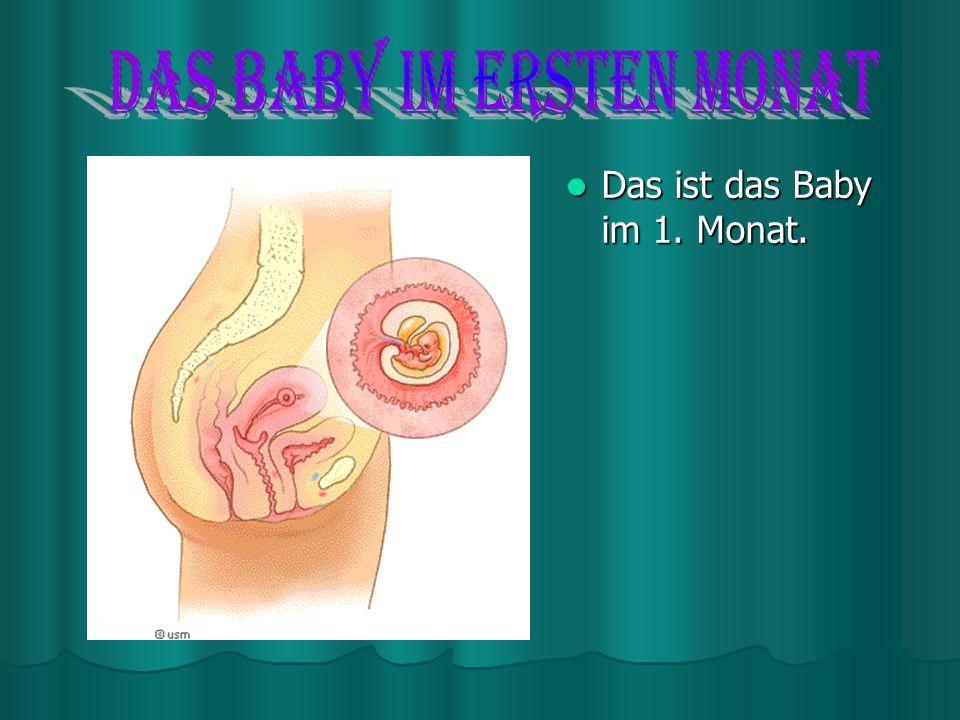 Menschlicher Fetus Menschlicher Fetus Bereits nach zwölf Wochen lässt der Fetus menschliche Formen erkennen. Der Fetus ist besonders empfindlich gegen