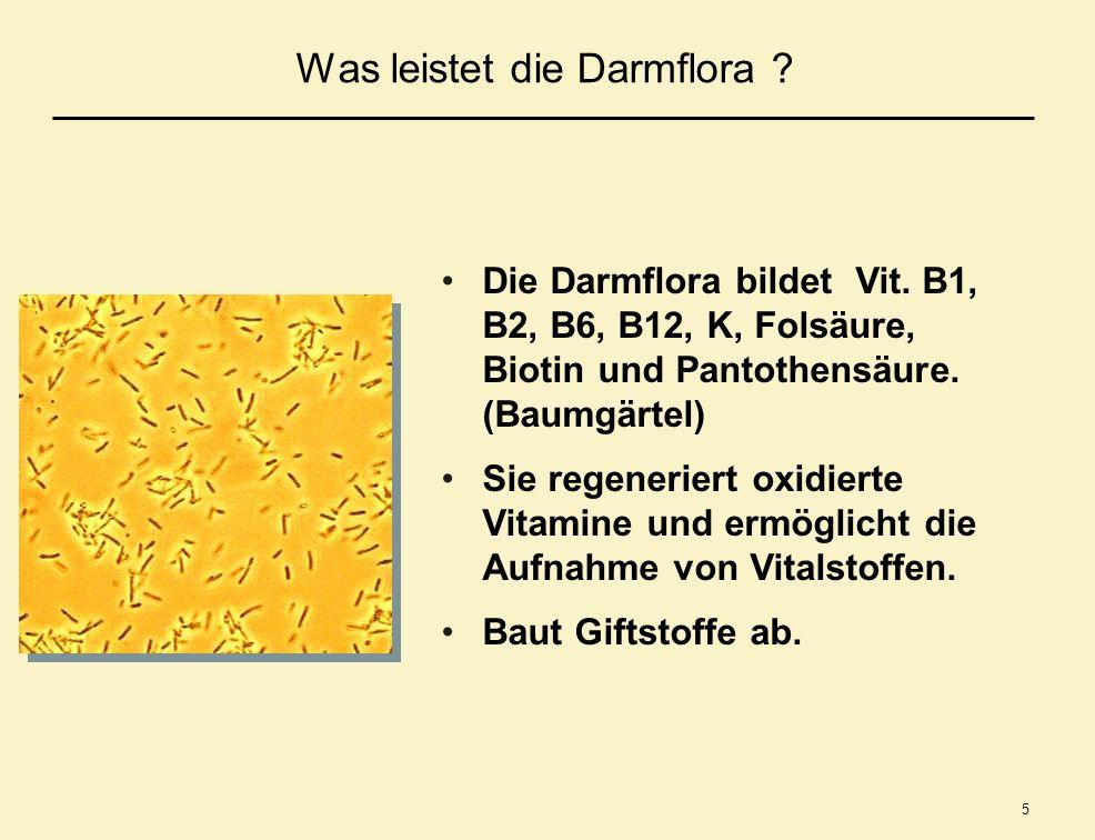 5 Was leistet die Darmflora ? Die Darmflora bildet Vit. B1, B2, B6, B12, K, Folsäure, Biotin und Pantothensäure. (Baumgärtel) Sie regeneriert oxidiert