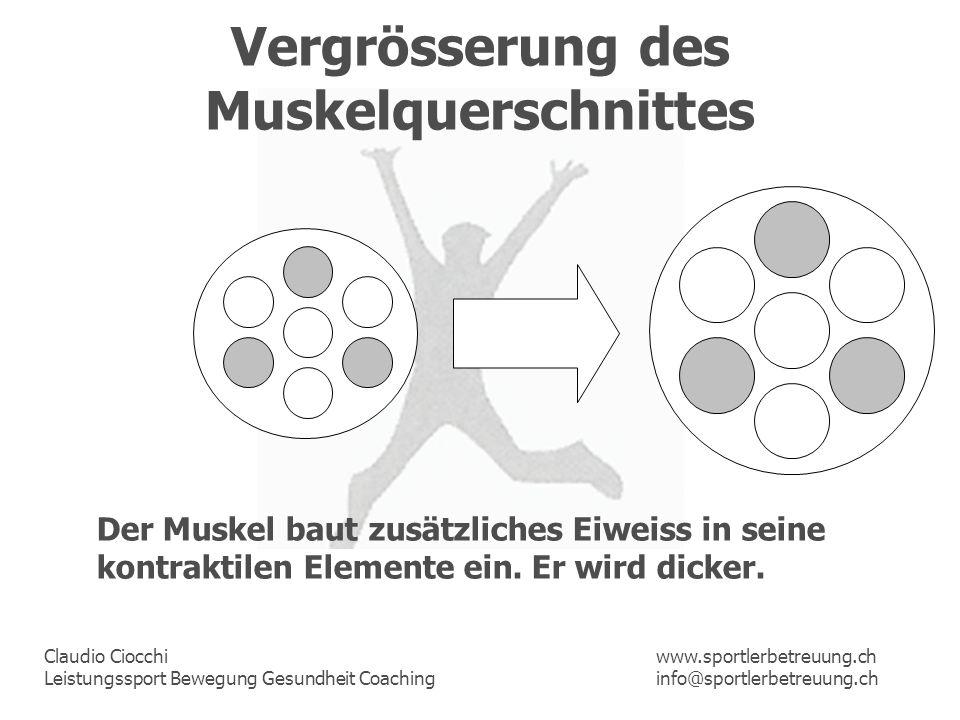 Claudio Ciocchi Leistungssport Bewegung Gesundheit Coaching www.sportlerbetreuung.ch info@sportlerbetreuung.ch Vergrösserung des Muskelquerschnittes D