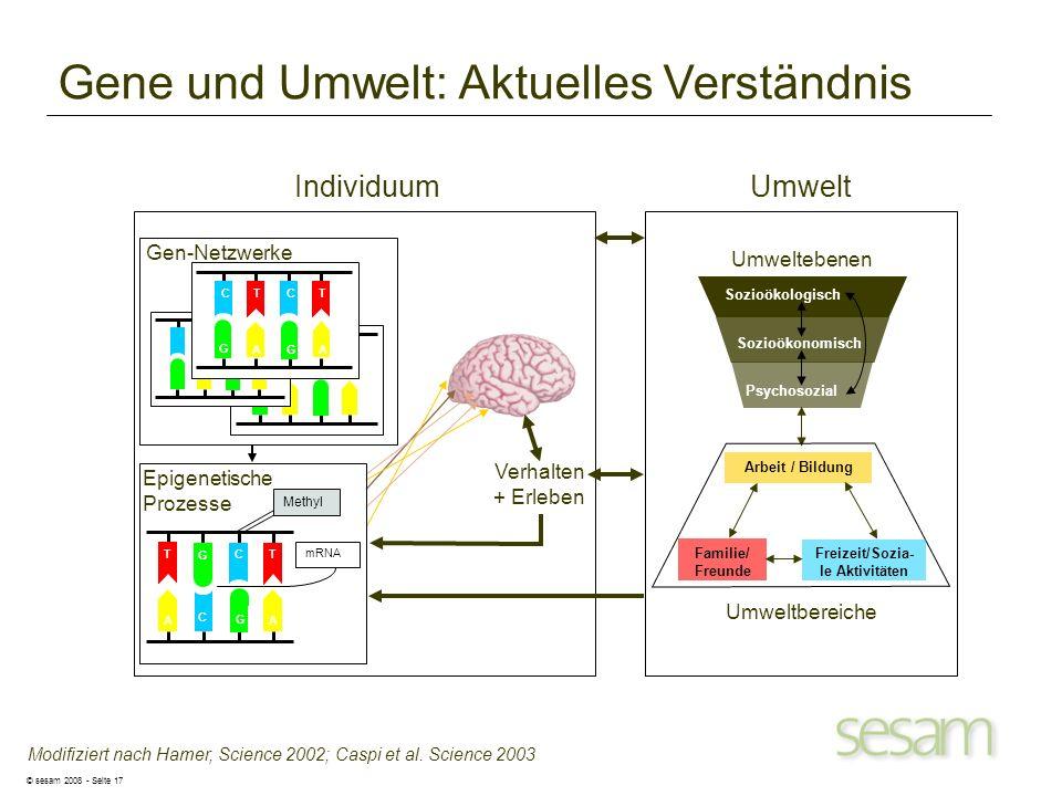 © sesam 2008 - Seite 17 Gene und Umwelt: Aktuelles Verständnis Modifiziert nach Hamer, Science 2002; Caspi et al. Science 2003 Verhalten + Erleben Epi