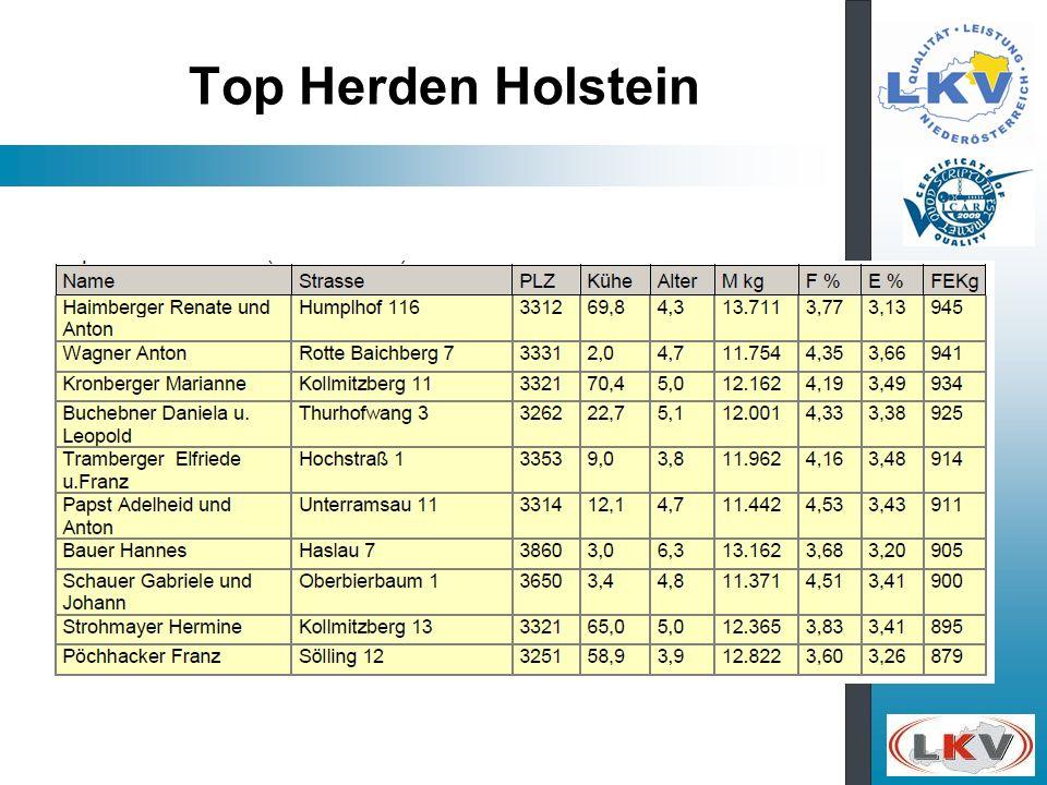 Top Herden Holstein