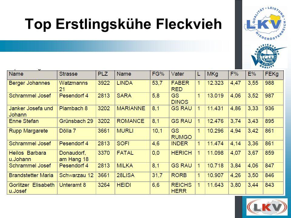 Top Erstlingskühe Fleckvieh