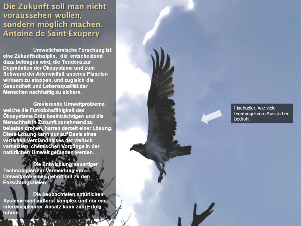 Fischadler, wie viele Greifvögel vom Aussterben bedroht