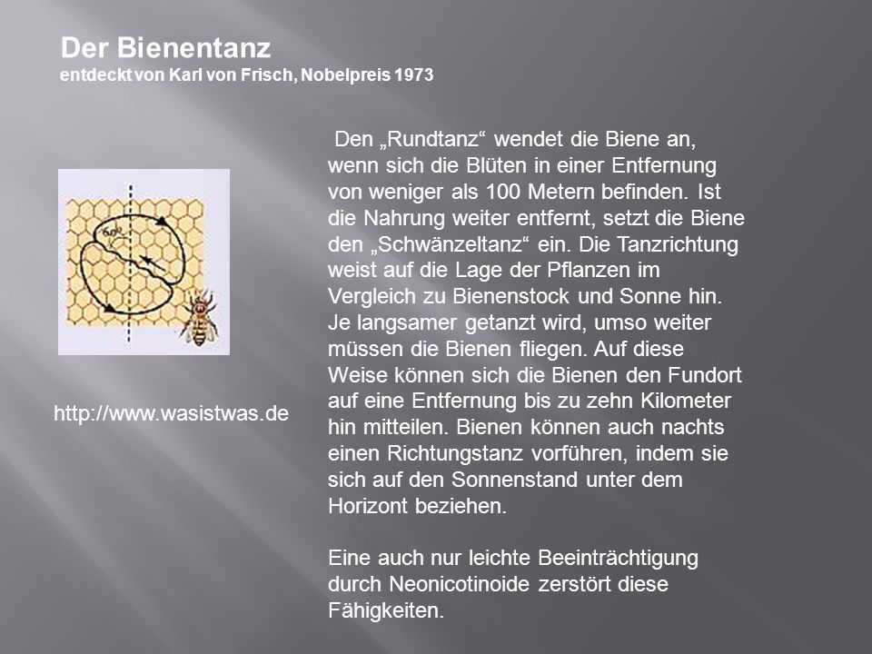 Der Bienentanz entdeckt von Karl von Frisch, Nobelpreis 1973 Den Rundtanz wendet die Biene an, wenn sich die Blüten in einer Entfernung von weniger al